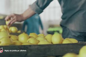 Okocimscy browarnicy reklamują piwo Okocim Radler Limonka z owocami leśnymi