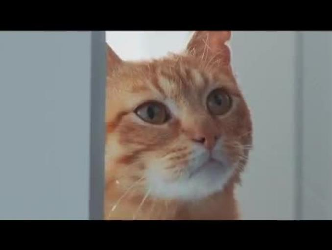 Kot tłumaczy młodemu bogowi w spocie Prudential Polska