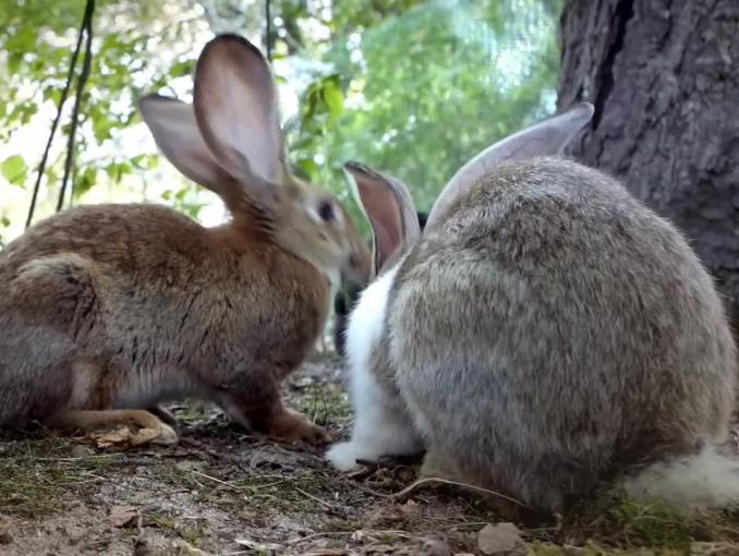 """""""PolecamBank"""" - króliki w spocie mBanku"""