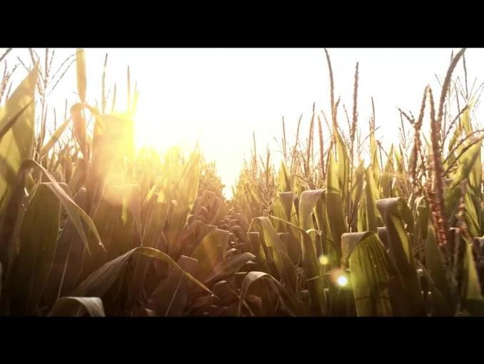 """Lubella Corn Flakes reklamowane jako """"najlepsze ze zboża"""""""