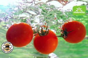 Polskie pomidory w reklamie sieci Stokrotka