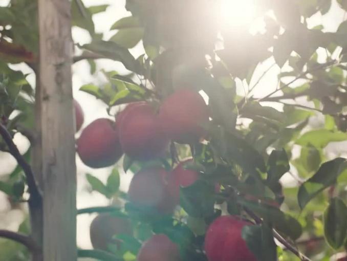 Biedronka promuje polskie jabłka