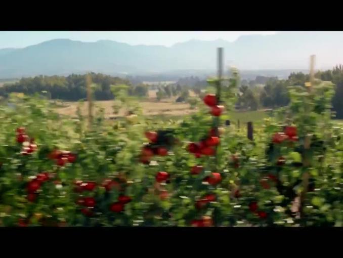 Sok pomidorowy Tymbark: W naturze nic nie ginie