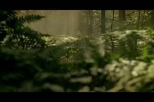Żubr Ciemnozłoty - reklama