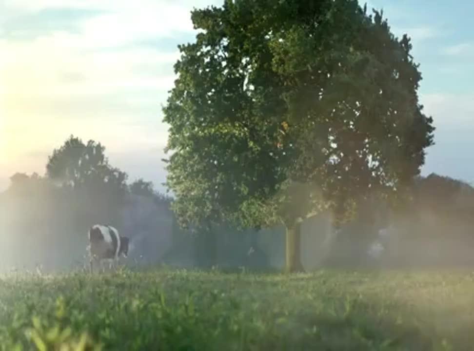 Krowa pod i na drzewie reklamuje mleko Łaciate