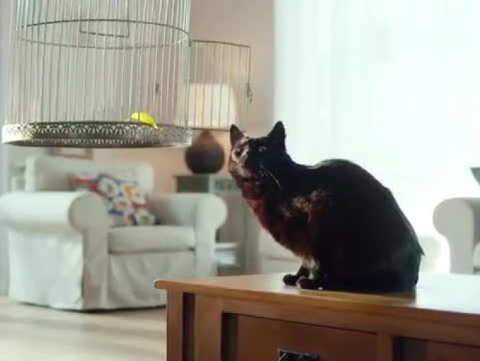Czarny kot po ptakach reklamuje Provident Polska