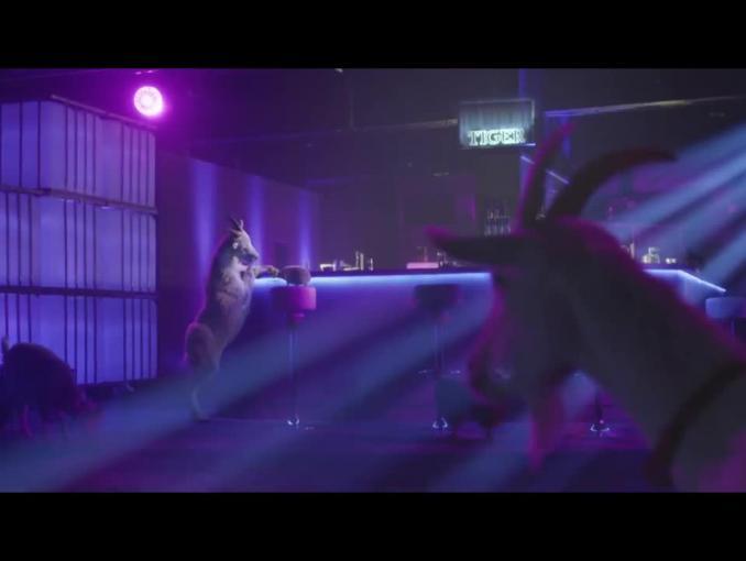Tygrys pobudza jeża do podrywania kóz w reklamie Tigera Classic