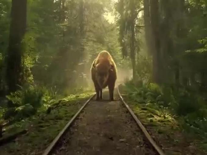 Żubr chroni dziki przed koleją - reklama piwa Żubr