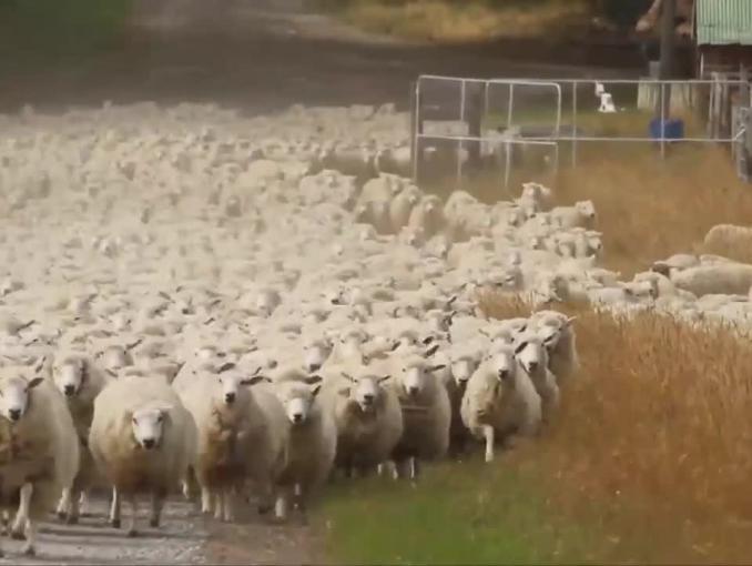 """""""Podatki są beeeee!"""" - owce strzyżone przez fiskusa w reklamie Union Investment TFI"""