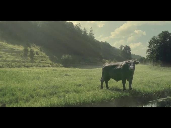 """""""Białe po mamie i zdrowe po byku"""" - romantyczna miłość w reklamie mleka Łaciate"""