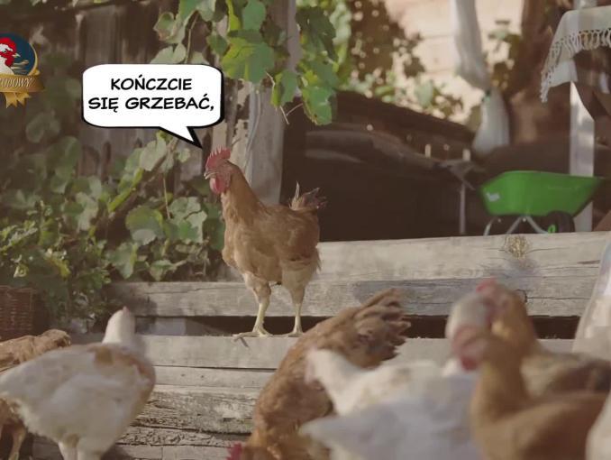 Wielki kurczak z małej zagrody