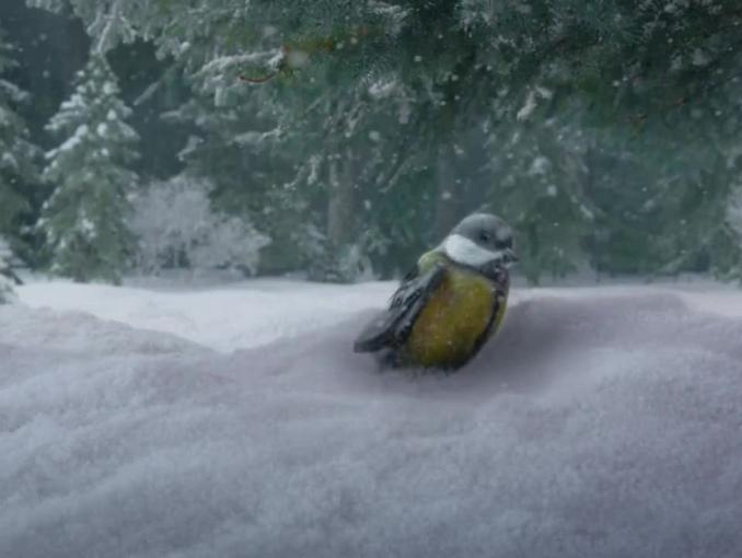 Para żubrów pomaga sikorce w zimowej reklamie piwa Żubr