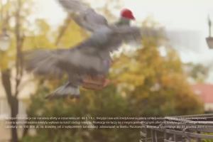 Gołębie reklamują Kredyt Pocztowy w Banku Pocztowym