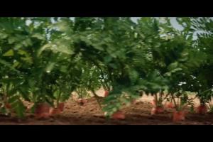 Historia marchewki w reklamie Tymbark Vitamini