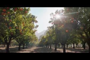 Podróż za pomarańczami w spocie soku Tymbark