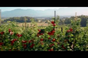 Pomidor - źródło źródło potasu i błonnika - spot Tymbark