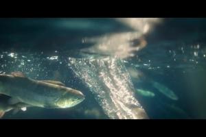 """Biedronka reklamuje """"świeże ryby codziennie pod ręką"""""""