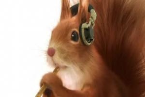 wiewiórka reklamuje paluszki Felix (2)