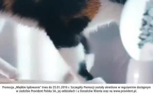 Miękkie lądowanie kota reklamuje pożyczkę w Providencie